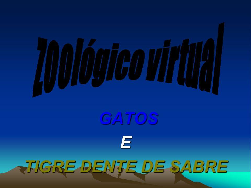 GATOS GATOSE TIGRE DENTE DE SABRE