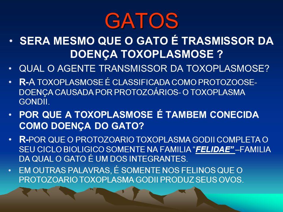 GATOS SERA MESMO QUE O GATO É TRASMISSOR DA DOENÇA TOXOPLASMOSE ? QUAL O AGENTE TRANSMISSOR DA TOXOPLASMOSE? R-A TOXOPLASMOSE É CLASSIFICADA COMO PROT