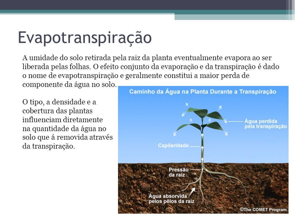 Evapotranspiração A umidade do solo retirada pela raiz da planta eventualmente evapora ao ser liberada pelas folhas. O efeito conjunto da evaporação e