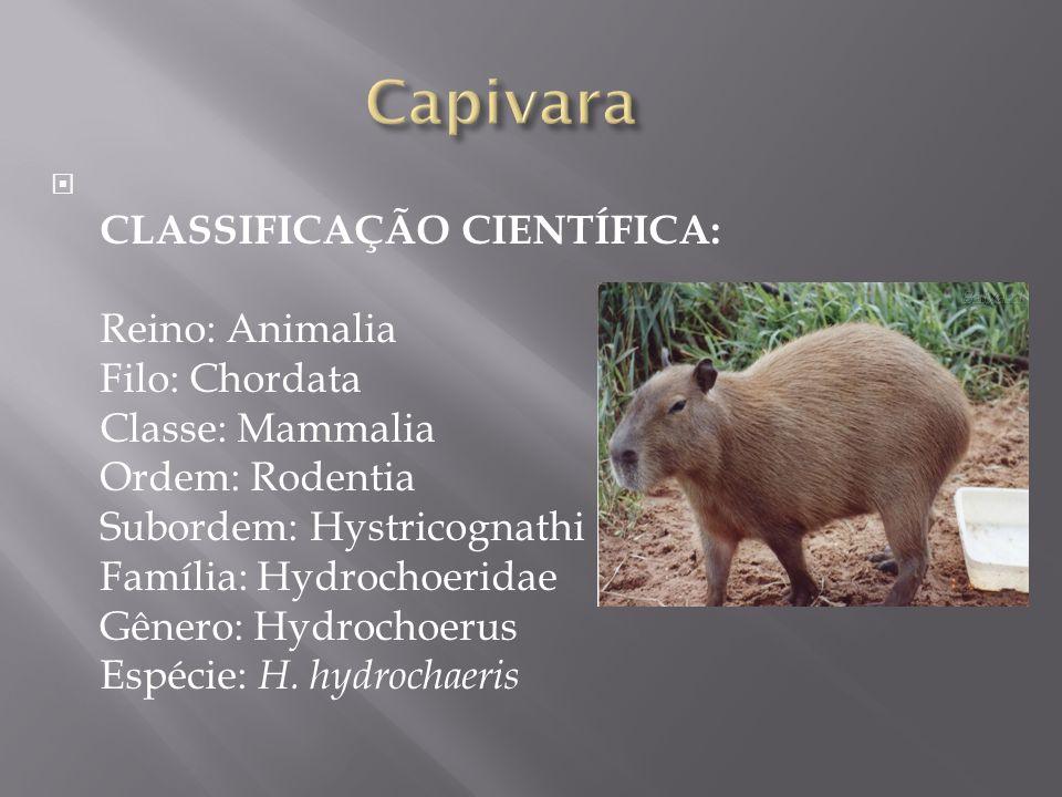 CLASSIFICAÇÃO CIENTÍFICA: Reino: Animalia Filo: Chordata Classe: Mammalia Ordem: Rodentia Subordem: Hystricognathi Família: Hydrochoeridae Gênero: Hyd