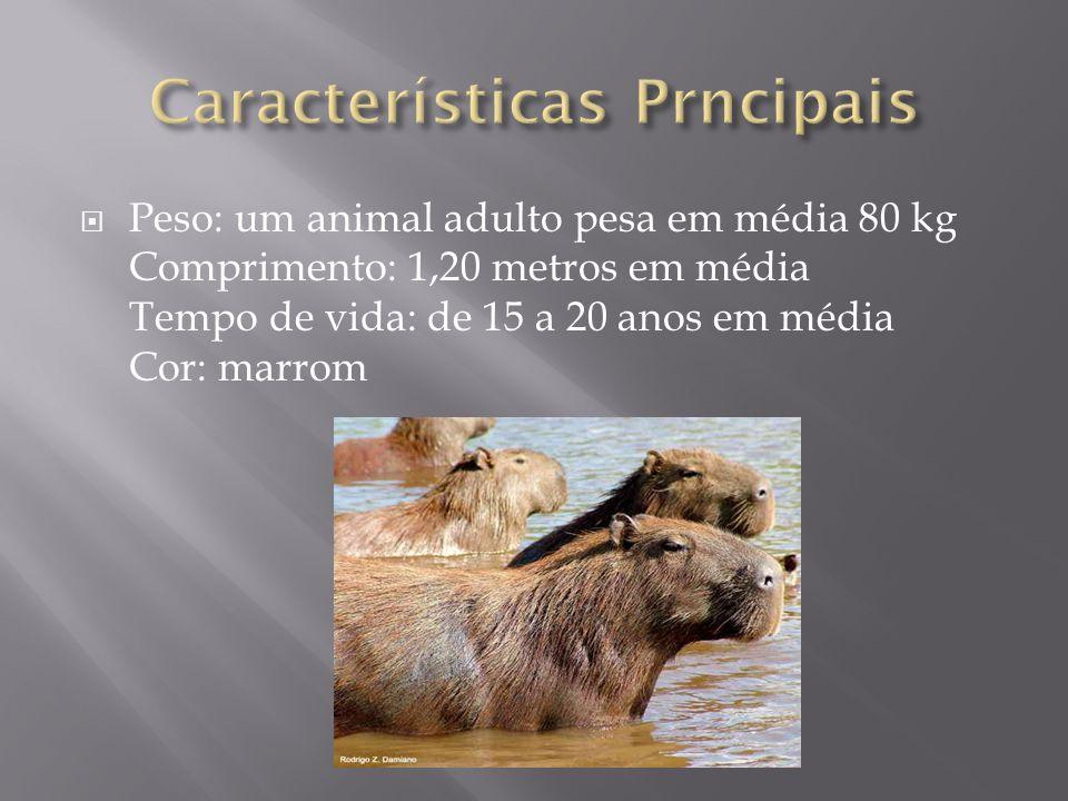 Peso: um animal adulto pesa em média 80 kg Comprimento: 1,20 metros em média Tempo de vida: de 15 a 20 anos em média Cor: marrom