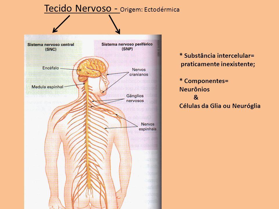 Tecido Nervoso - Origem: Ectodérmica * Substância intercelular= praticamente inexistente; * Componentes= Neurônios & Células da Glia ou Neuróglia