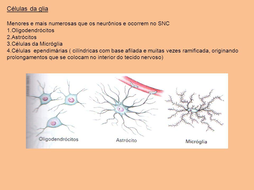 Células da glia Menores e mais numerosas que os neurônios e ocorrem no SNC 1.Oligodendrócitos 2.Astrócitos 3.Células da Micróglia 4.Células ependimári