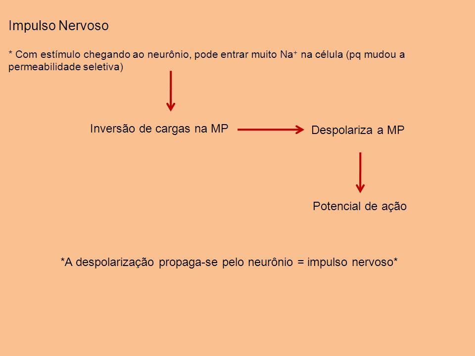 Impulso Nervoso * Com estímulo chegando ao neurônio, pode entrar muito Na + na célula (pq mudou a permeabilidade seletiva) Inversão de cargas na MP De