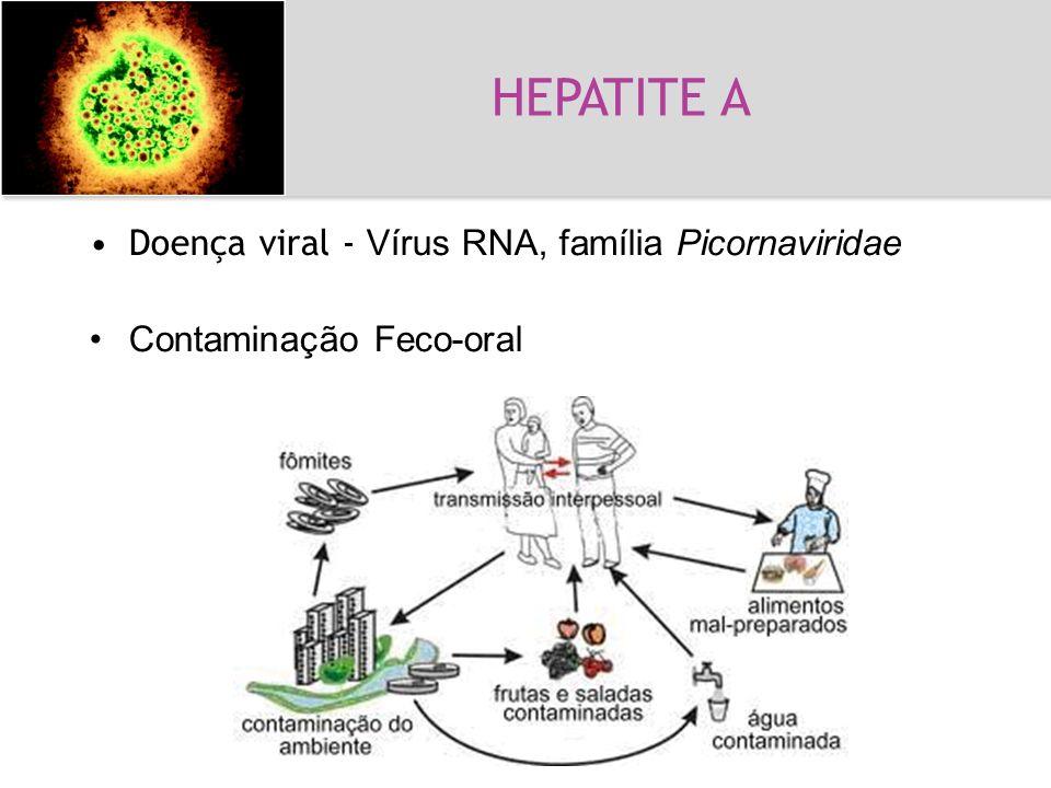 Hepatite A Doença viral - Vírus RNA, família Picornaviridae Contaminação Feco-oral HEPATITE A