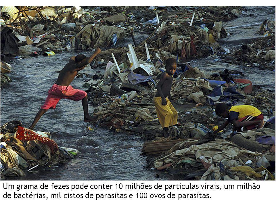 Cólera Vibrio cholerae *Toxina Bactéria, Gram - Doença de humanos, não tem animais reservatórios 7 pandemias desde século 19 CÓLERA Frerichs, 2012.