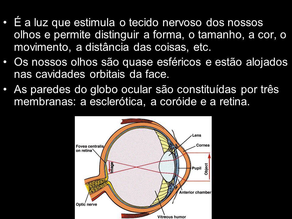 Esclerótica: membrana mais externa do olho, é branca, fibrosa e resistente; mantém a forma do globo ocular e protege-o; Coróide: a faixa circular da coróide que rodeia a pupila é denominada de íris e pode ter uma cor azul, castanha, cinza ou verde; por meio de dois músculos lisos, a íris regula o diâmetro da pupila; quando a claridade do ambiente é pouco intensa, a pupila dilata-se para deixar entrar no olho o máximo de luz possível; quando a claridade é demasiado intensa, a pupila contrai-se para impedir que o excesso de luz prejudique a visão.