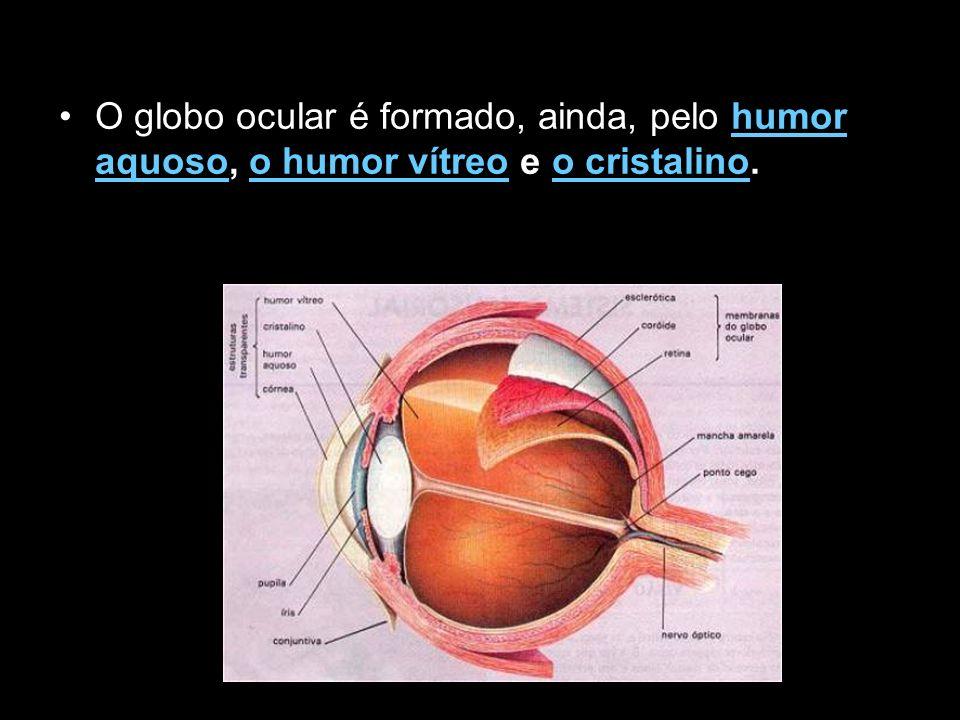 Doenças Oculares Agnosia Visual A Agnosia Visual compreende a incapacidade de reconhecimento visual de objectos na ausência de disfunções ópticas.
