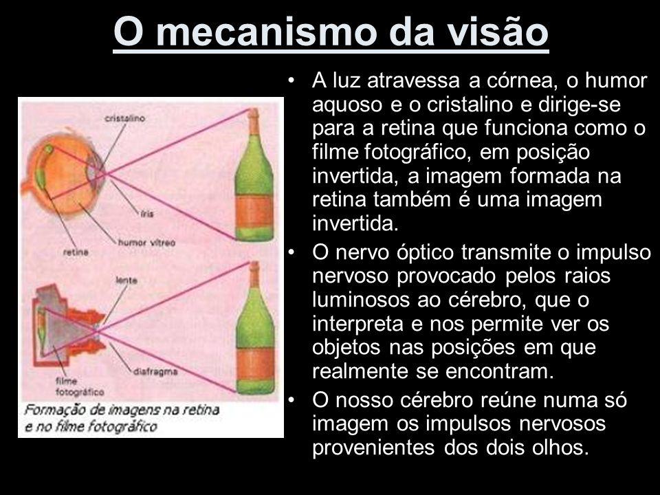 O mecanismo da visão A luz atravessa a córnea, o humor aquoso e o cristalino e dirige-se para a retina que funciona como o filme fotográfico, em posiç