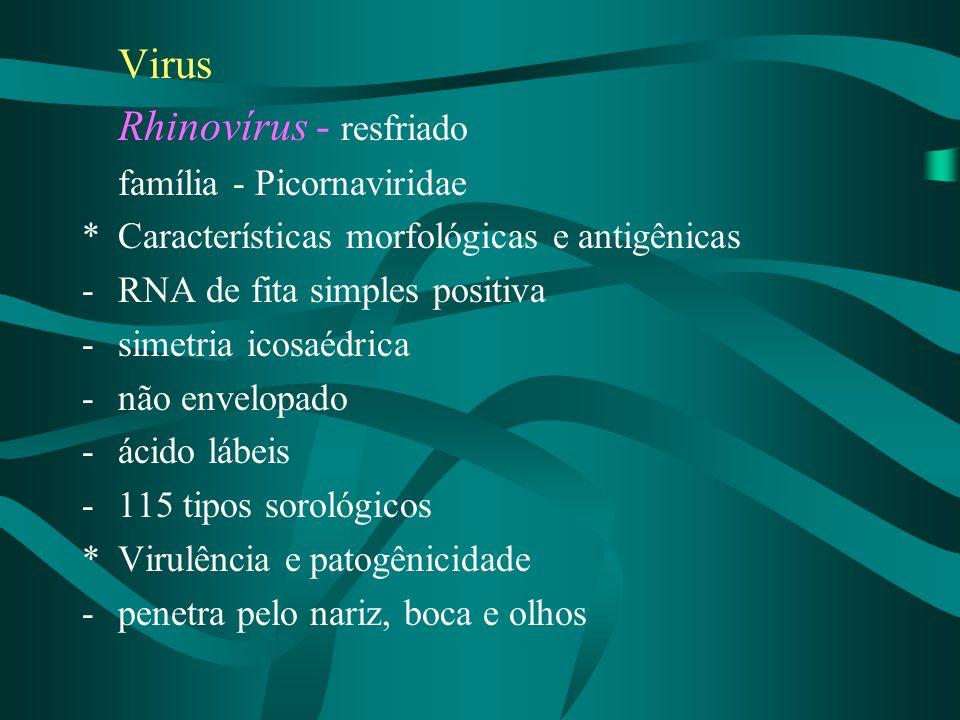 Virus Rhinovírus - resfriado família - Picornaviridae *Características morfológicas e antigênicas -RNA de fita simples positiva -simetria icosaédrica