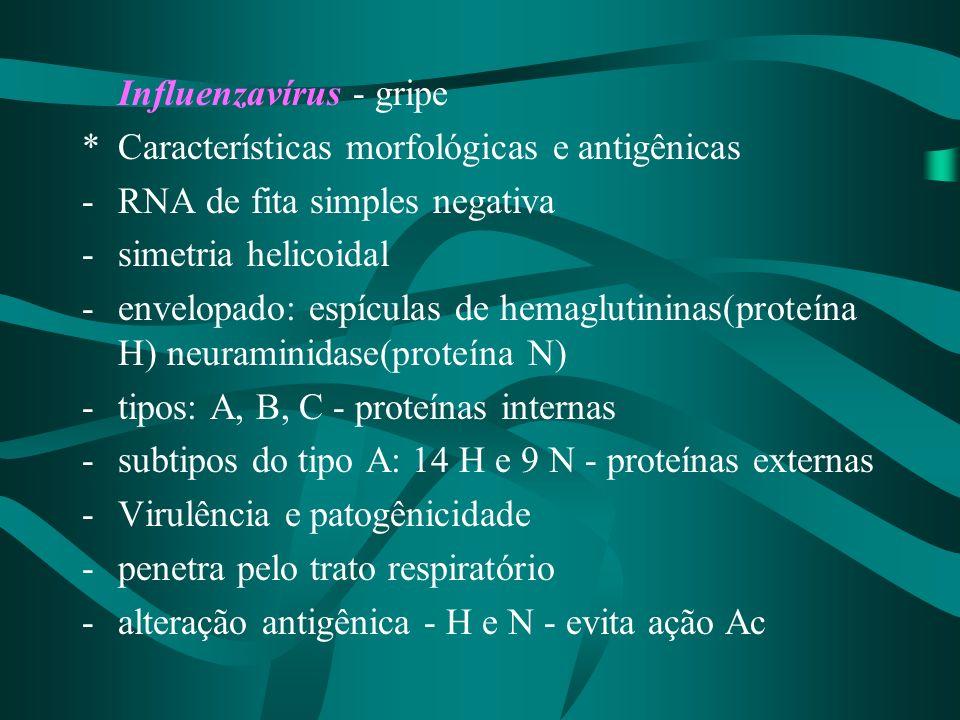 Influenzavírus - gripe *Características morfológicas e antigênicas -RNA de fita simples negativa -simetria helicoidal -envelopado: espículas de hemagl
