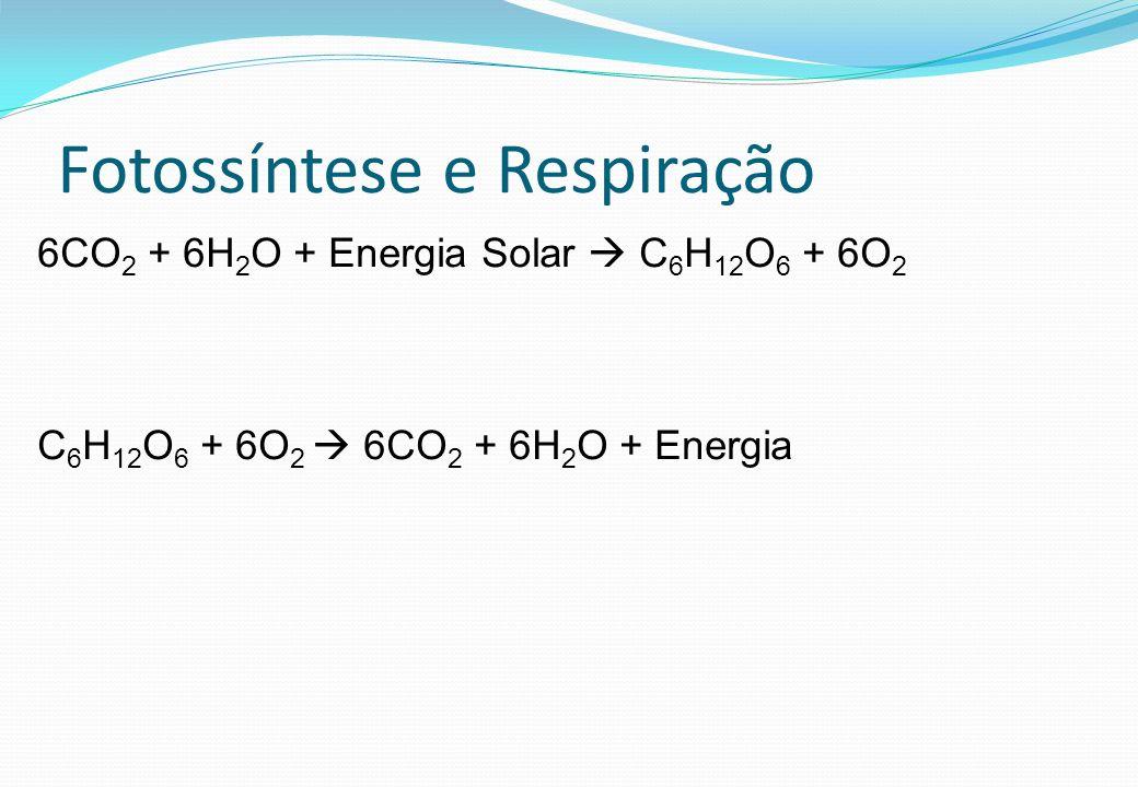 Fotossíntese e Respiração 6CO 2 + 6H 2 O + Energia Solar C 6 H 12 O 6 + 6O 2 C 6 H 12 O 6 + 6O 2 6CO 2 + 6H 2 O + Energia