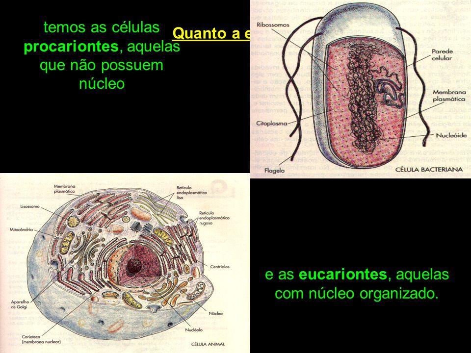 Quanto a estrutura temos as células procariontes, aquelas que não possuem núcleo e as eucariontes, aquelas com núcleo organizado.