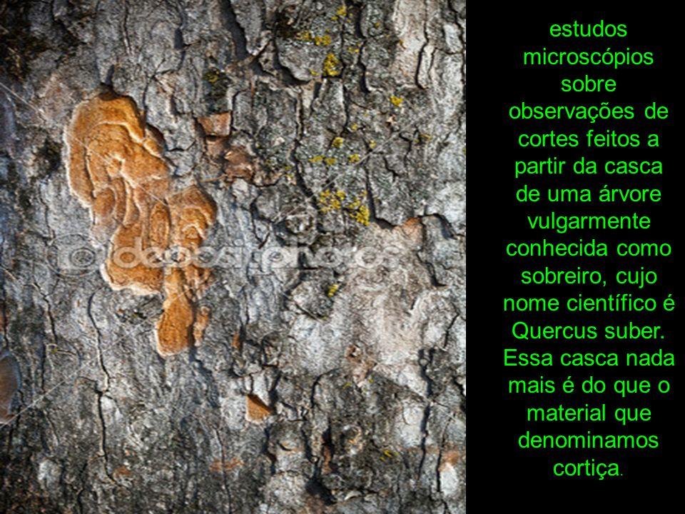 estudos microscópios sobre observações de cortes feitos a partir da casca de uma árvore vulgarmente conhecida como sobreiro, cujo nome científico é Quercus suber.