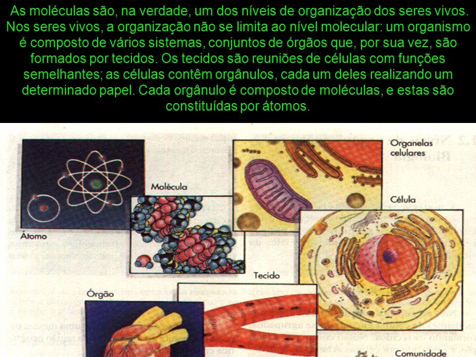 As moléculas são, na verdade, um dos níveis de organização dos seres vivos.