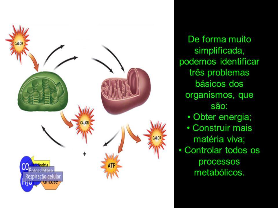De forma muito simplificada, podemos identificar três problemas básicos dos organismos, que são: Obter energia; Construir mais matéria viva; Controlar todos os processos metabólicos.