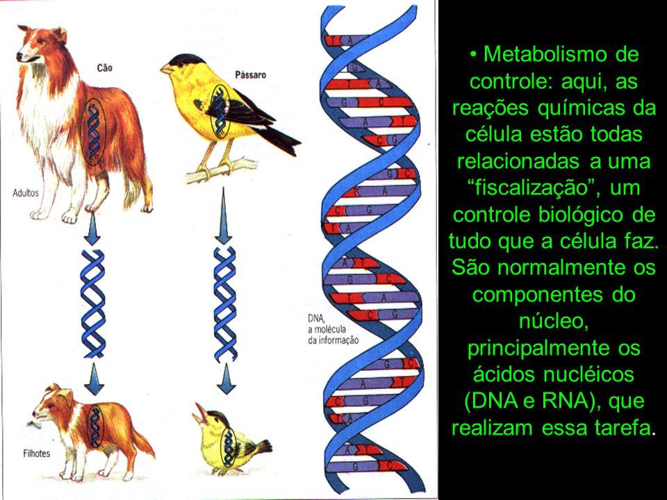 Metabolismo de controle: aqui, as reações químicas da célula estão todas relacionadas a uma fiscalização, um controle biológico de tudo que a célula faz.