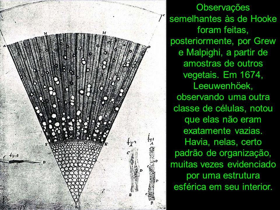 Observações semelhantes às de Hooke foram feitas, posteriormente, por Grew e Malpighi, a partir de amostras de outros vegetais.