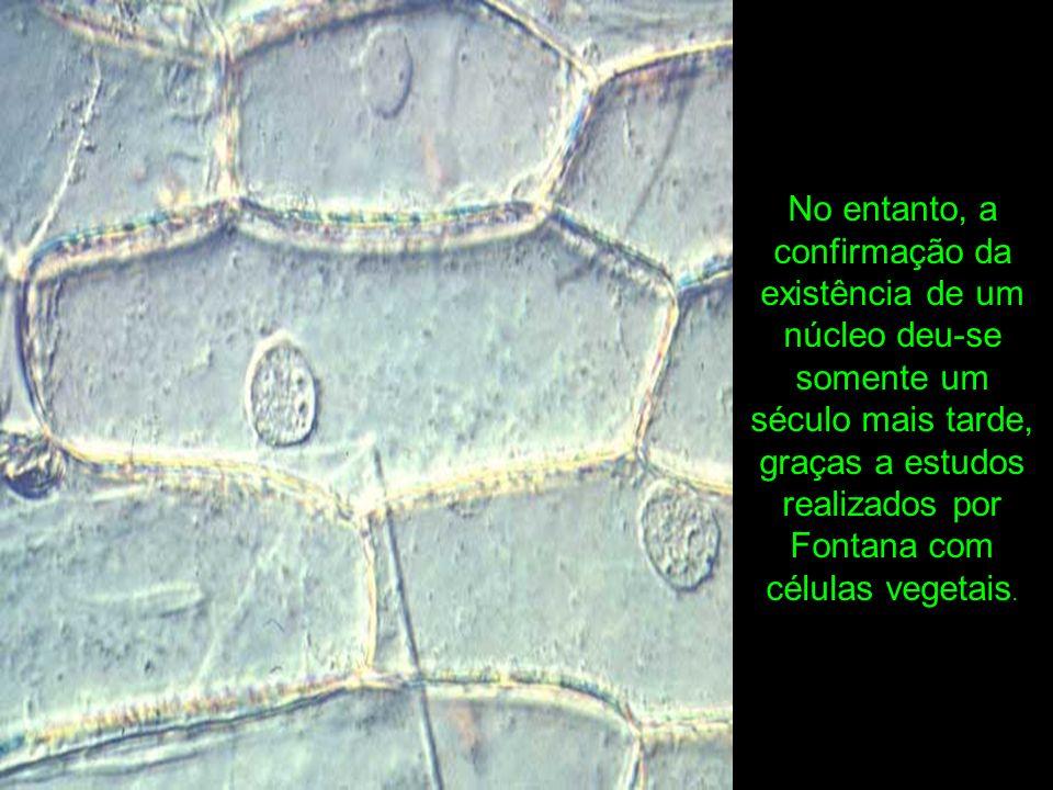 Em 1831, Robert Brown confirmava a presença dessa estrutura também em células animais.