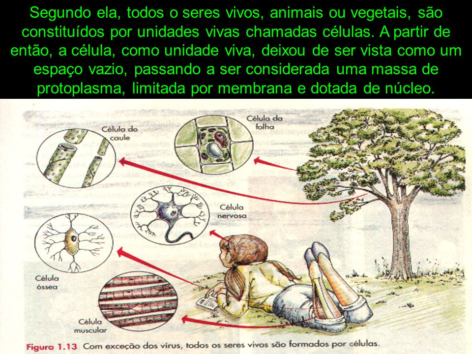 Segundo ela, todos o seres vivos, animais ou vegetais, são constituídos por unidades vivas chamadas células.