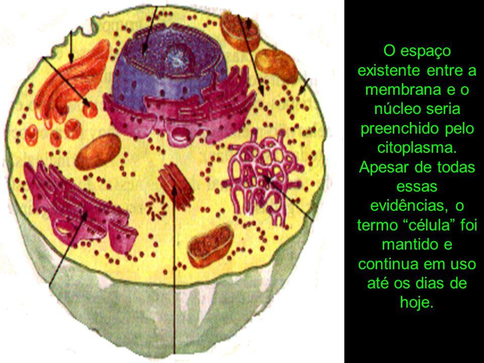 As propriedades de um organismo dependem das atividades e características de suas células.