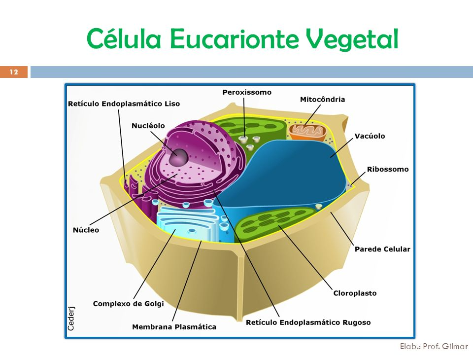 Célula Eucarionte Vegetal 12 Elab.: Prof. Gilmar
