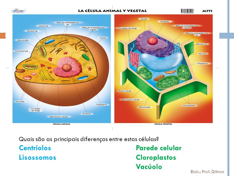Quais são as principais diferenças entre estas células? CentríolosParede celular LisossomosCloroplastos Vacúolo 14 Elab.: Prof. Gilmar