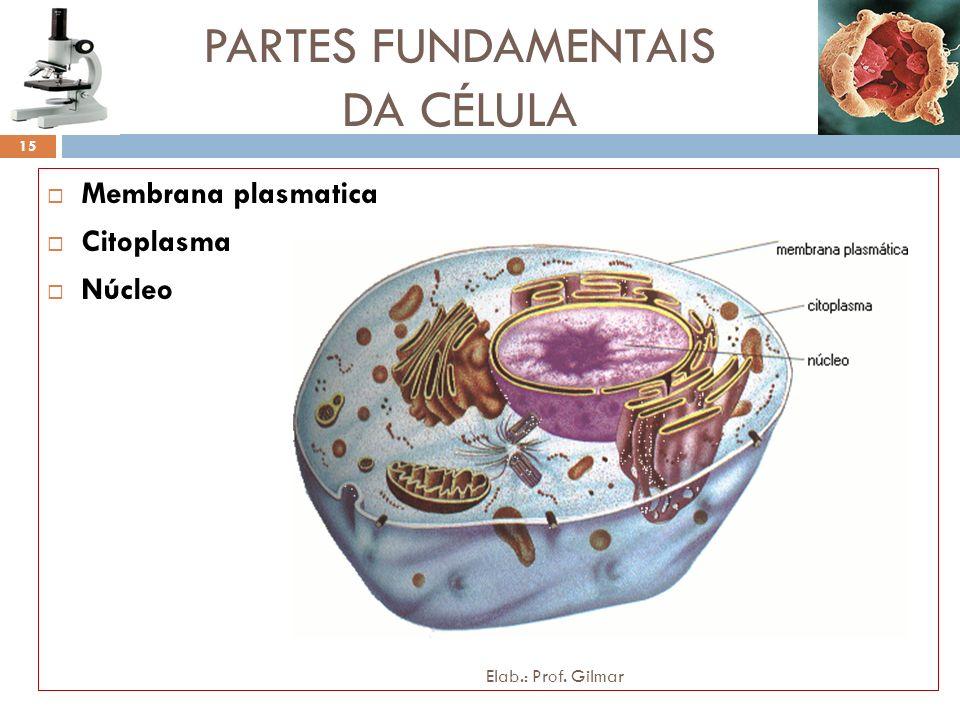 PARTES FUNDAMENTAIS DA CÉLULA Membrana plasmatica Citoplasma Núcleo 15 Elab.: Prof. Gilmar