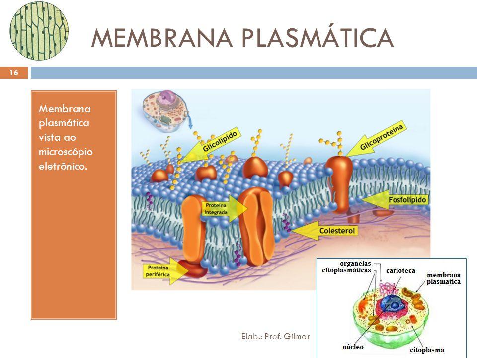MEMBRANA PLASMÁTICA Membrana plasmática vista ao microscópio eletrônico. 16 Elab.: Prof. Gilmar
