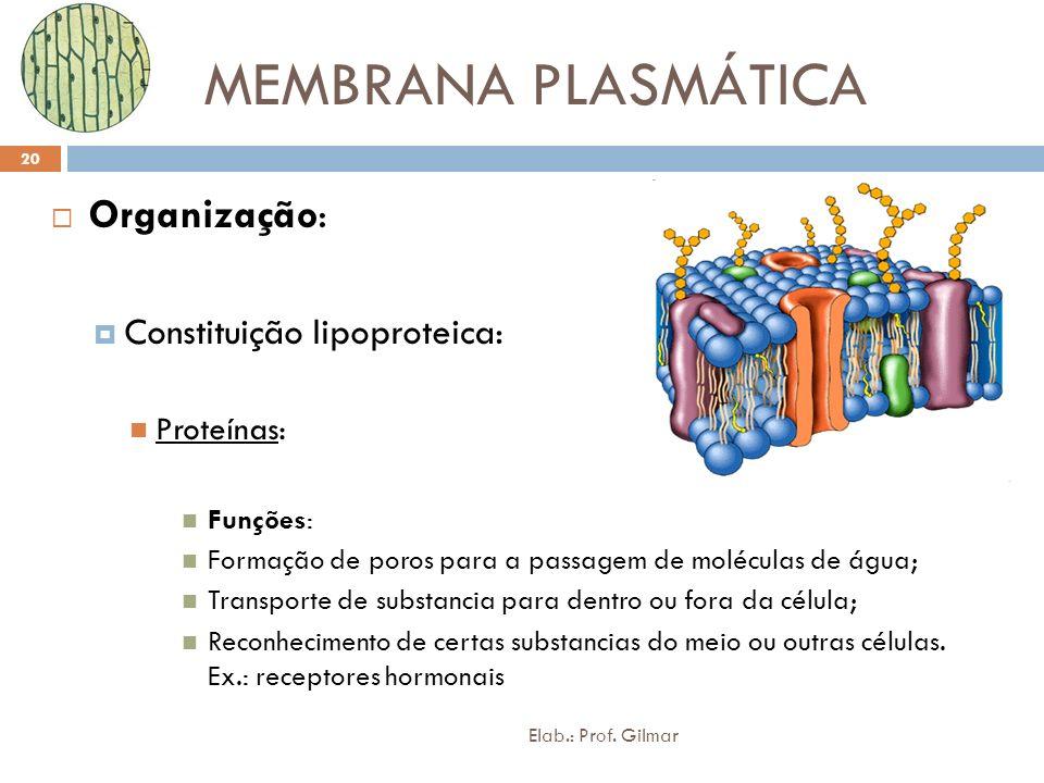 MEMBRANA PLASMÁTICA Organização: Constituição lipoproteica: Proteínas: Funções: Formação de poros para a passagem de moléculas de água; Transporte de