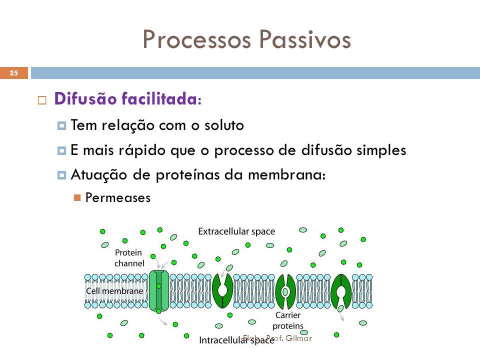 Processos Passivos Difusão facilitada: Tem relação com o soluto E mais rápido que o processo de difusão simples Atuação de proteínas da membrana: Perm
