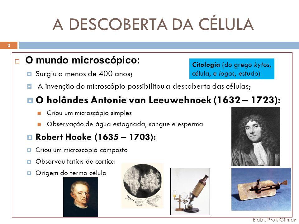 A DESCOBERTA DA CÉLULA O mundo microscópico: Surgiu a menos de 400 anos; A invenção do microscópio possibilitou a descoberta das células; O holândes A