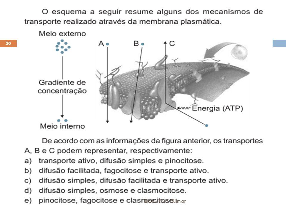 30 Elab.: Prof. Gilmar
