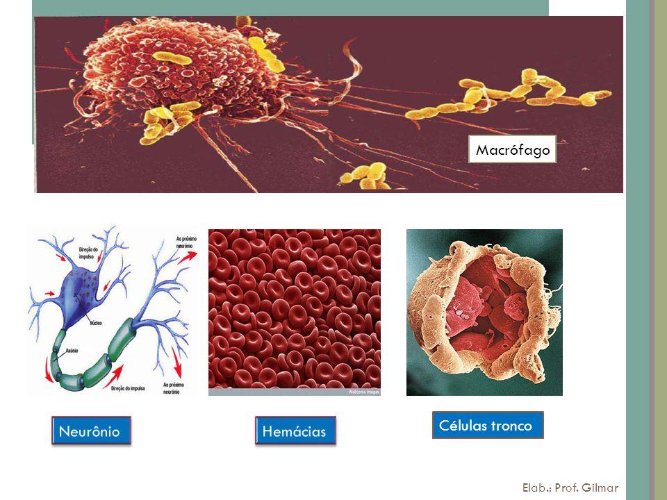6 Células tronco Macrófago