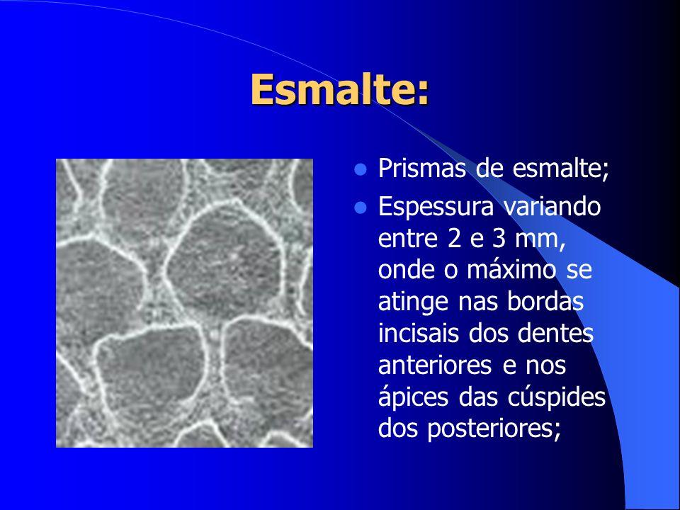 Esmalte: Prismas de esmalte; Espessura variando entre 2 e 3 mm, onde o máximo se atinge nas bordas incisais dos dentes anteriores e nos ápices das cús