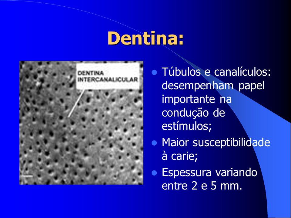 Dentina: Túbulos e canalículos: desempenham papel importante na condução de estímulos; Maior susceptibilidade à carie; Espessura variando entre 2 e 5