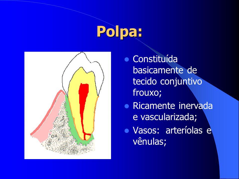 Polpa: Constituída basicamente de tecido conjuntivo frouxo; Ricamente inervada e vascularizada; Vasos: arteríolas e vênulas;