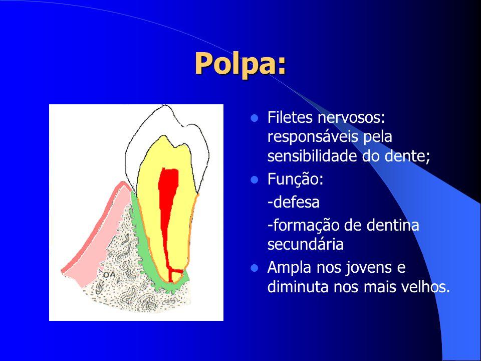 Polpa: Filetes nervosos: responsáveis pela sensibilidade do dente; Função: -defesa -formação de dentina secundária Ampla nos jovens e diminuta nos mai