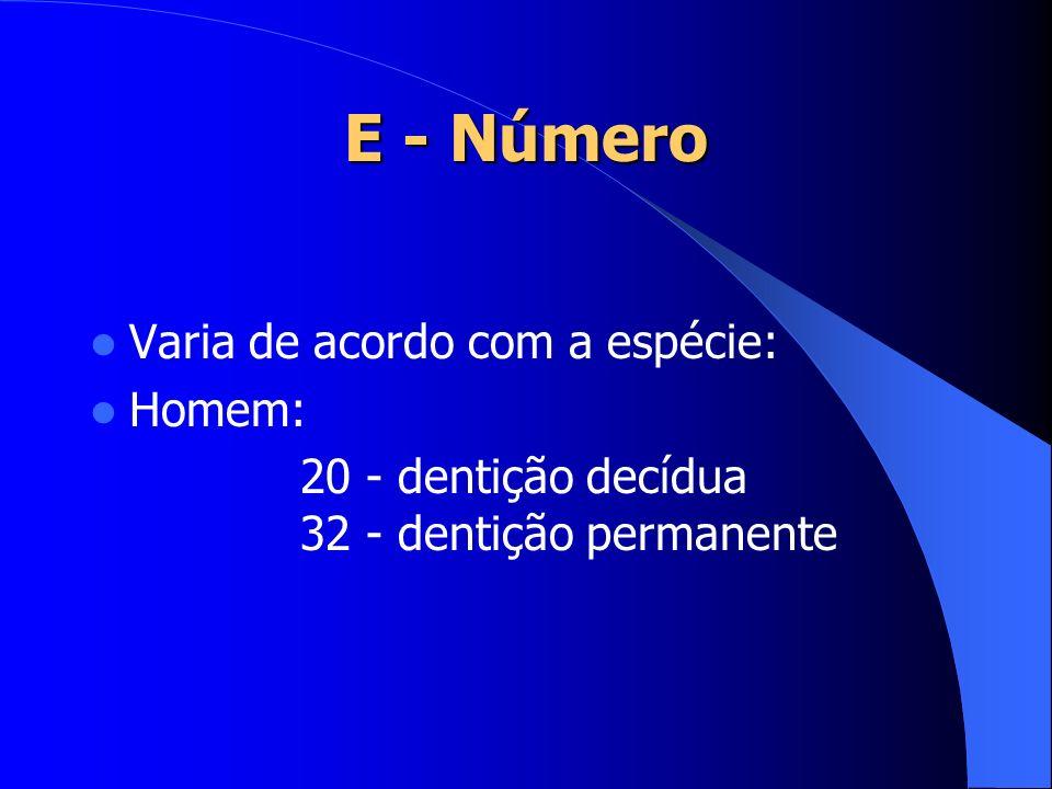 E - Número Varia de acordo com a espécie: Homem: 20 - dentição decídua 32 - dentição permanente