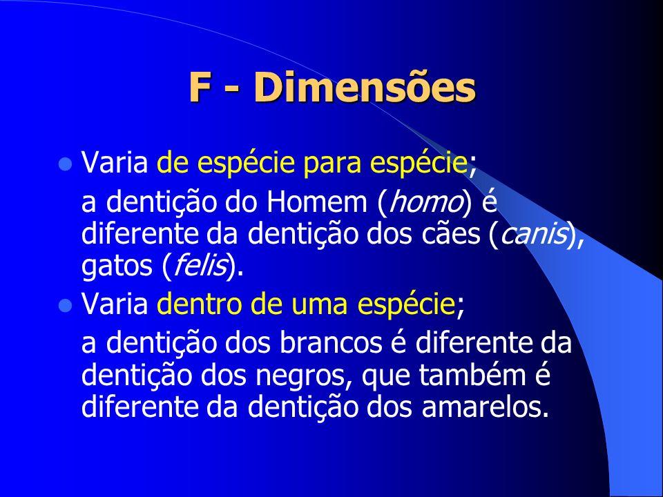 F - Dimensões Varia de espécie para espécie; a dentição do Homem (homo) é diferente da dentição dos cães (canis), gatos (felis). Varia dentro de uma e