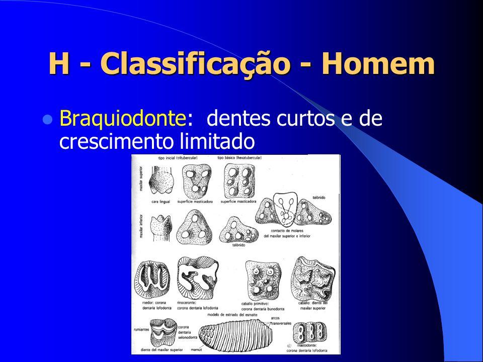 H - Classificação - Homem Braquiodonte: dentes curtos e de crescimento limitado