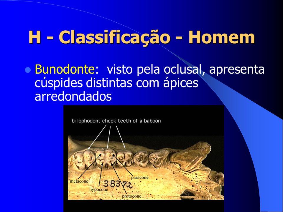 H - Classificação - Homem Bunodonte: visto pela oclusal, apresenta cúspides distintas com ápices arredondados