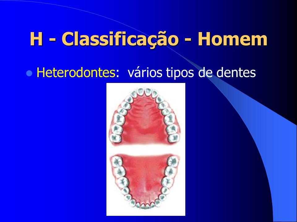 H - Classificação - Homem Heterodontes: vários tipos de dentes