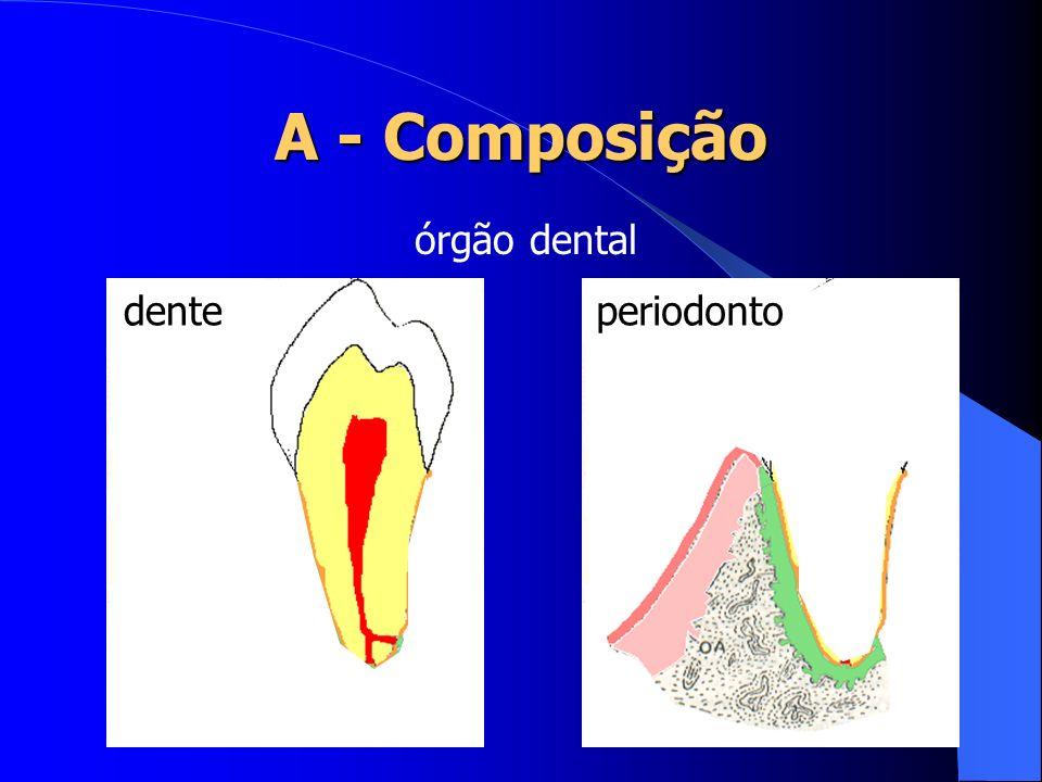 Dentina: Túbulos e canalículos: desempenham papel importante na condução de estímulos; Maior susceptibilidade à carie; Espessura variando entre 2 e 5 mm.