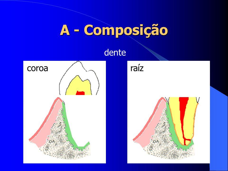 A - Composição esmalte dentina polpa dente