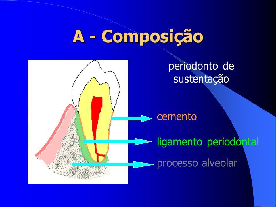 Polpa: Filetes nervosos: responsáveis pela sensibilidade do dente; Função: -defesa -formação de dentina secundária Ampla nos jovens e diminuta nos mais velhos.