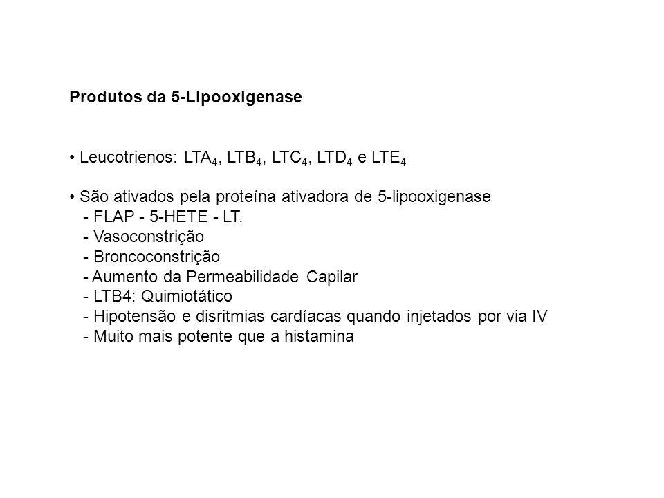 Produtos da 5-Lipooxigenase Leucotrienos: LTA 4, LTB 4, LTC 4, LTD 4 e LTE 4 São ativados pela proteína ativadora de 5-lipooxigenase - FLAP - 5-HETE -