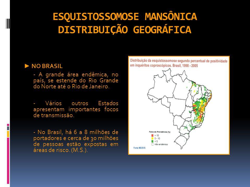 ESQUISTOSSOMOSE MANSÔNICA DISTRIBUIÇÃO GEOGRÁFICA NO BRASIL - A grande área endêmica, no país, se estende do Rio Grande do Norte até o Rio de Janeiro.