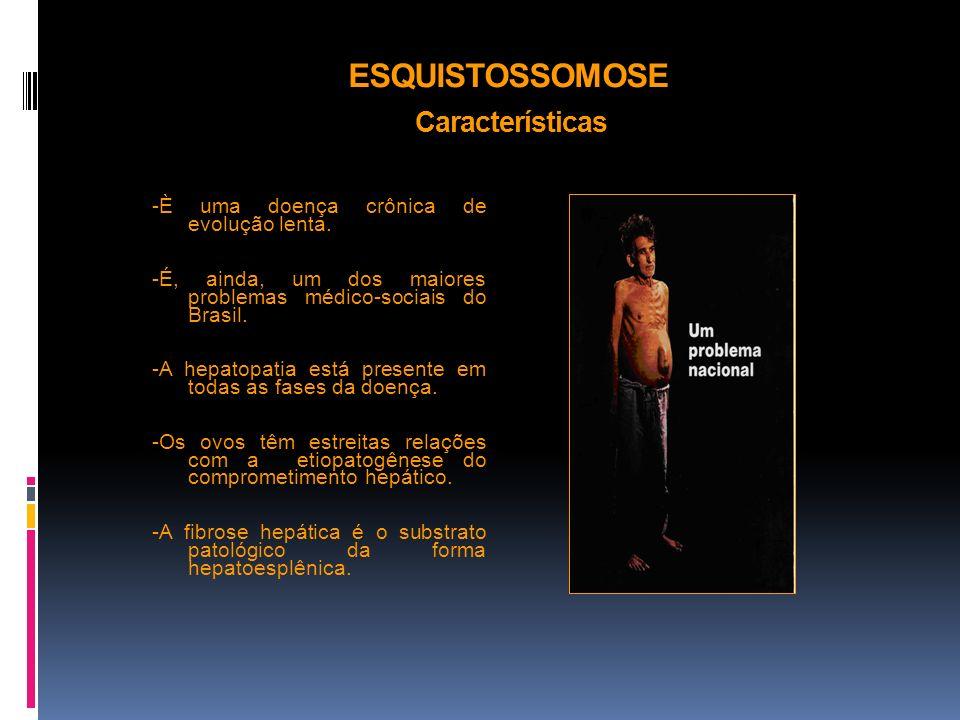 ESQUISTOSSOMOSE Características -È uma doença crônica de evolução lenta. -É, ainda, um dos maiores problemas médico-sociais do Brasil. -A hepatopatia