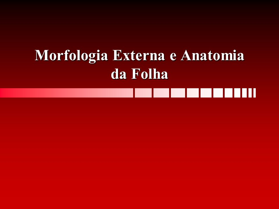 Morfologia Externa e Anatomia da Folha